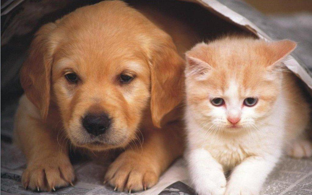 Superstitii cu caini si pisici