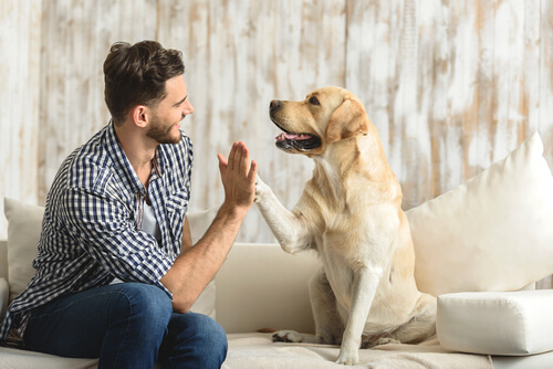 Beneficiile de a avea un animal de companie